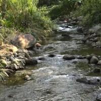 Air1-yang-mengalir-dari-kawasan-hutan-ini-dimanfaatkan-masyarakat-adat-Rumah-Kinangkung-buat-pembangkit-listrik-tenaga-air-Ayat-S-Karokaro